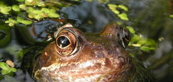 frogday