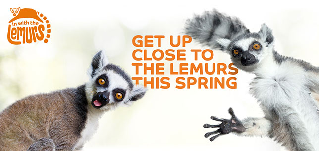 inwiththelemurs