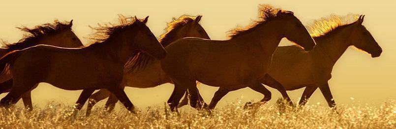 horse.2