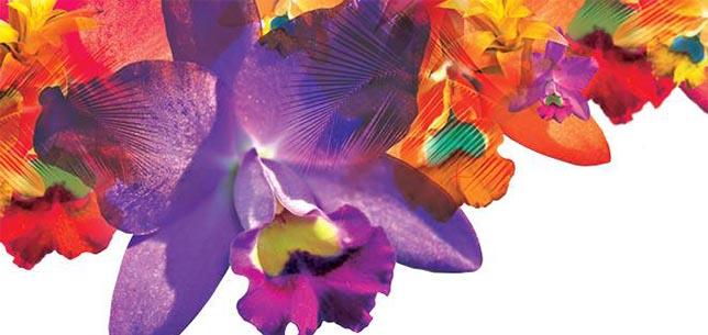 orchidskew