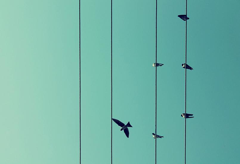 birds-209280_960_720